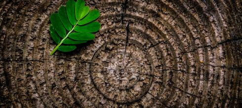 Tree rings with leaf